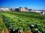Higher Ground Farm