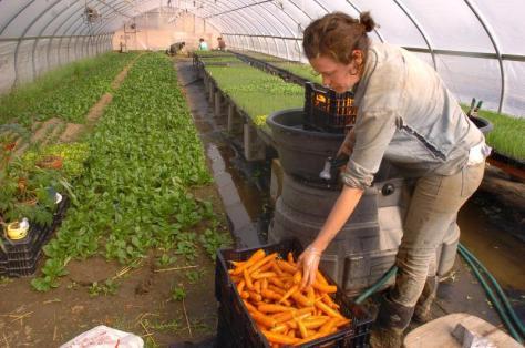 JERREY ROBERTS Eliza Murphy washes carrots